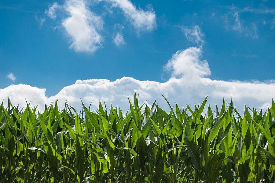 A importância do agronegócio para o Brasil e oportunidades de tradução
