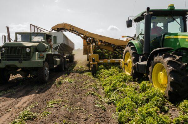 Curva crescente em exportações no agronegócio brasileiro